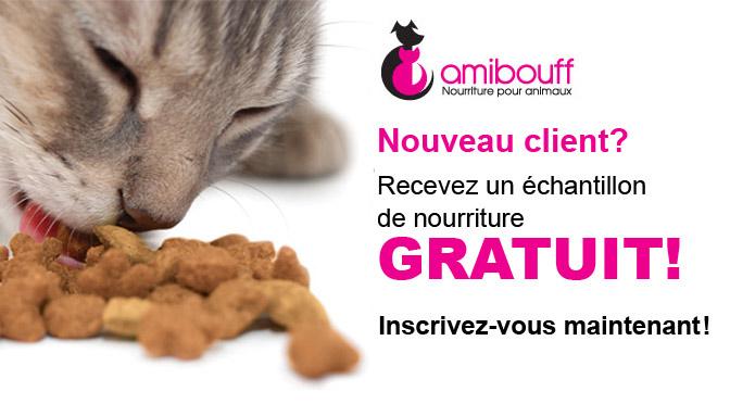 Chat gratuite sans inscription sans java